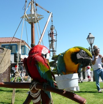 parrots at Ventura Harbor festival